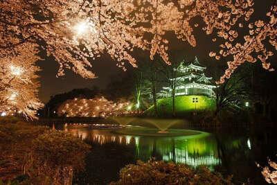 Попасть в неописуемый парк цветов Асикага (Япония)