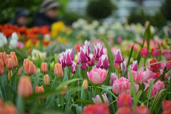 Выставка весенних цветов «Репетиция весны»