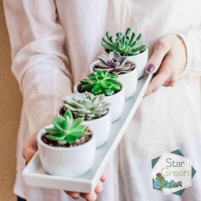 СУККУЛЕНТЫ выносливые растения (@stargreen.by) • Фото и видео в Instagram