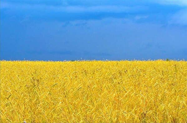 Чтобы в Украине был мир!