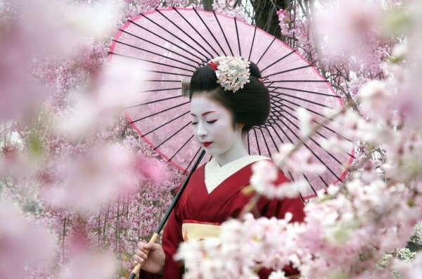 Побывать на фестивале цветения сакуры в Японии