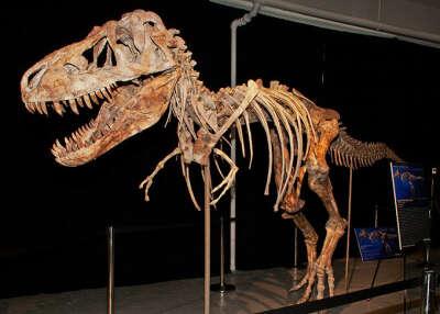 хочу потрогать кости динозавра и сделать с ним селфи