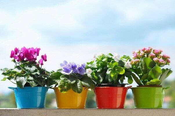 Самой вырастить растение