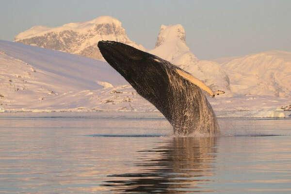 Увидеть китов в Антарктиде 🐋