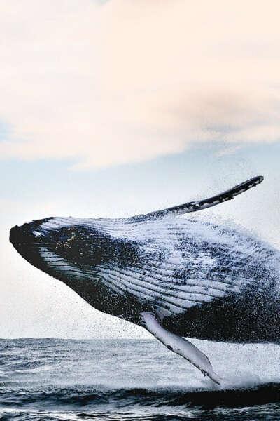 Увидеть кита