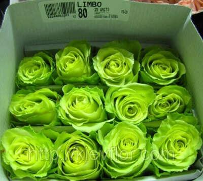 зеленые розы *-*