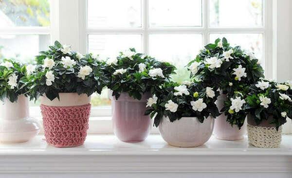 Неприхотливый комнатный цветок