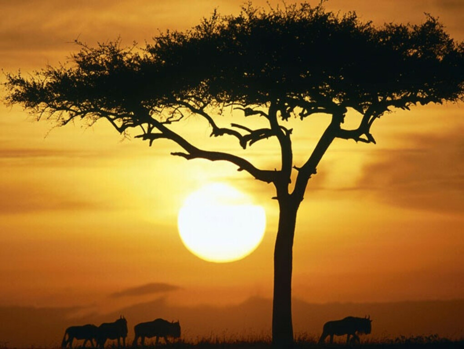 Совершить путешествие по Африке