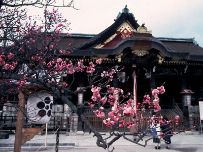Хочу побывать в Японии.
