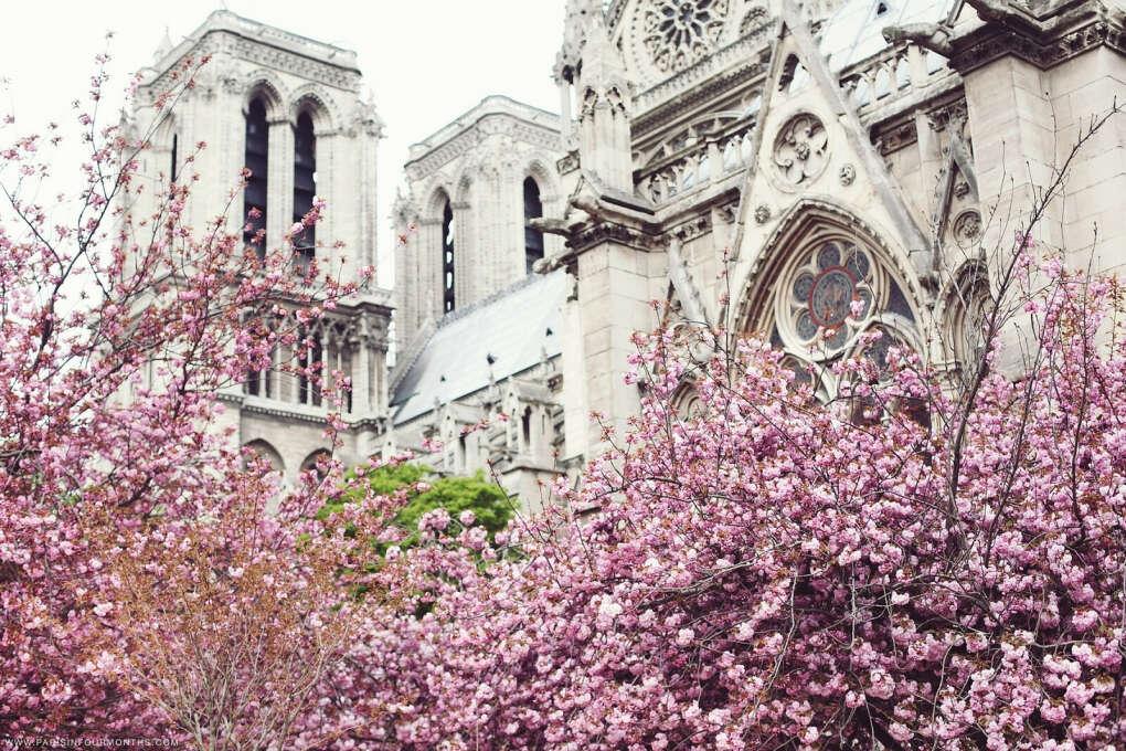 Гуляю по весеннему цветущему Парижу