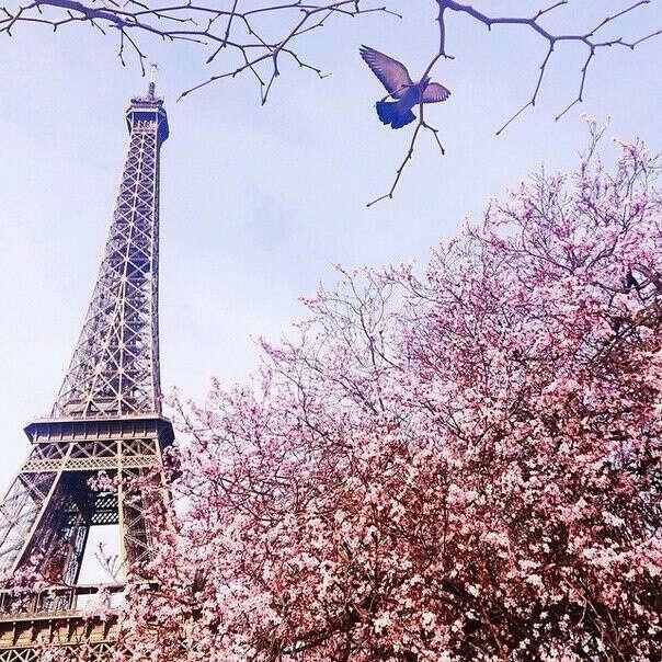 Поехать в Париж весной