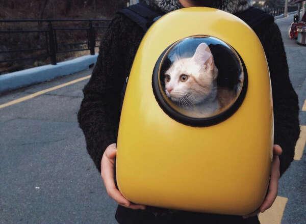 Рюкзак для кота с иллюминатором