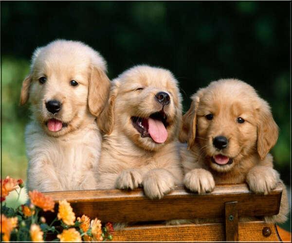 Чтобы у каждого щенка был дом