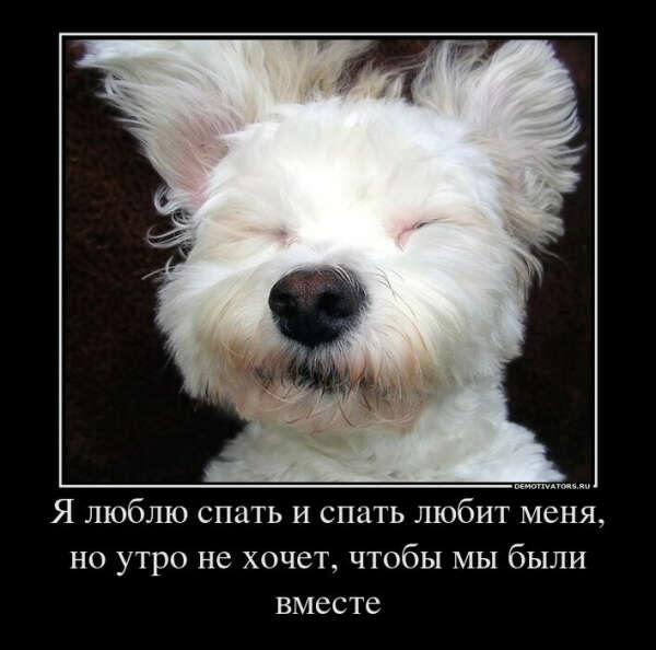 Хочу проспать всю ночь до утра не просыпаясь... и выспаться!