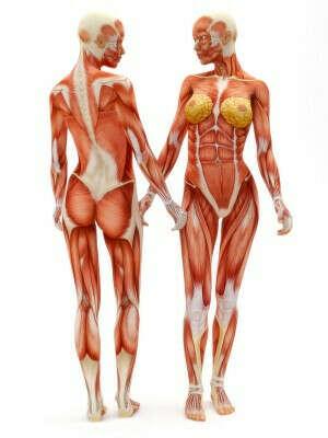 Изучить физиологию человека