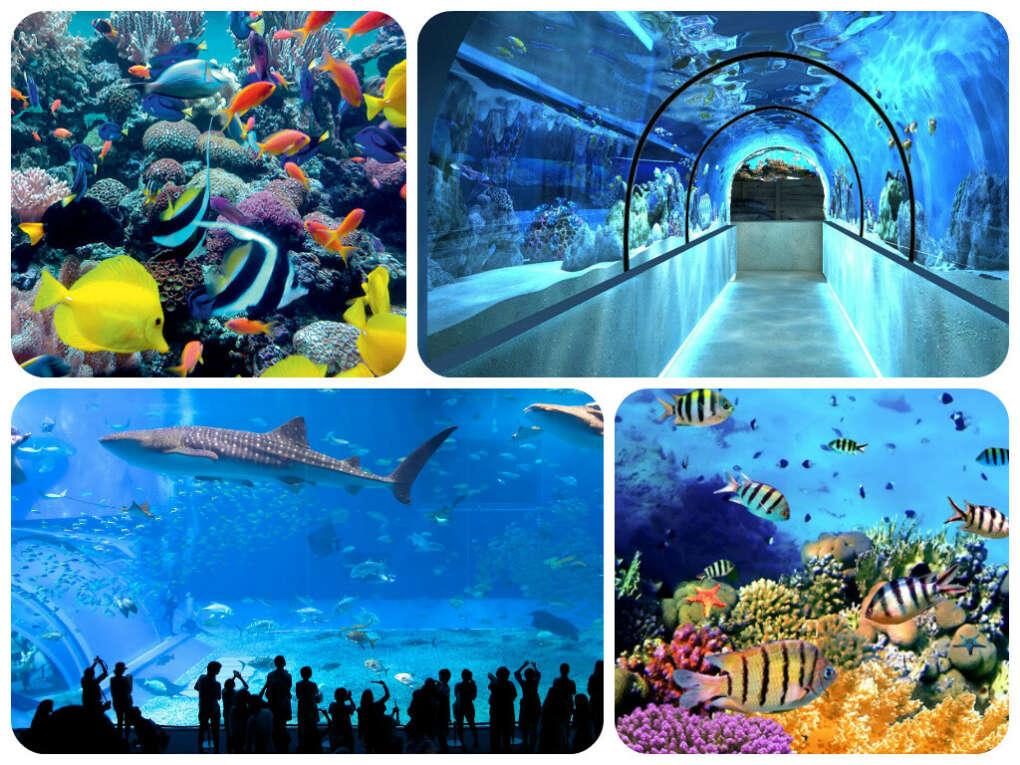 Посетить океанариум