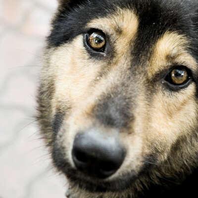 Открыть приют для бездомных животных