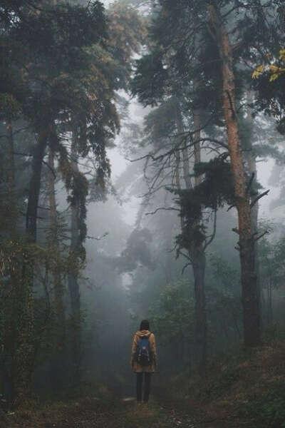 В лес