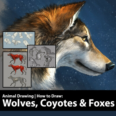 How to Draw Wolves, Coyotes & Foxes