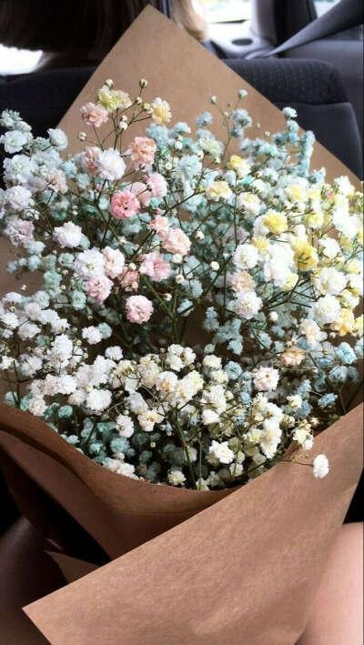 Цветы Гипсофил