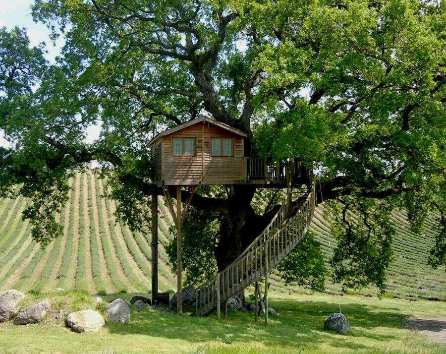 Пожить в домике на дереве