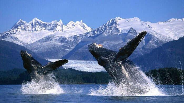 я хочу увидеть живых китов!!!