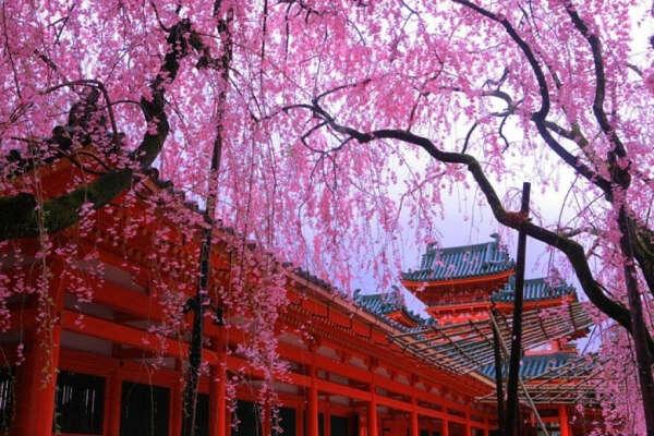 Побывать в Японии
