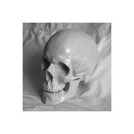 Гипсовая модель черепа