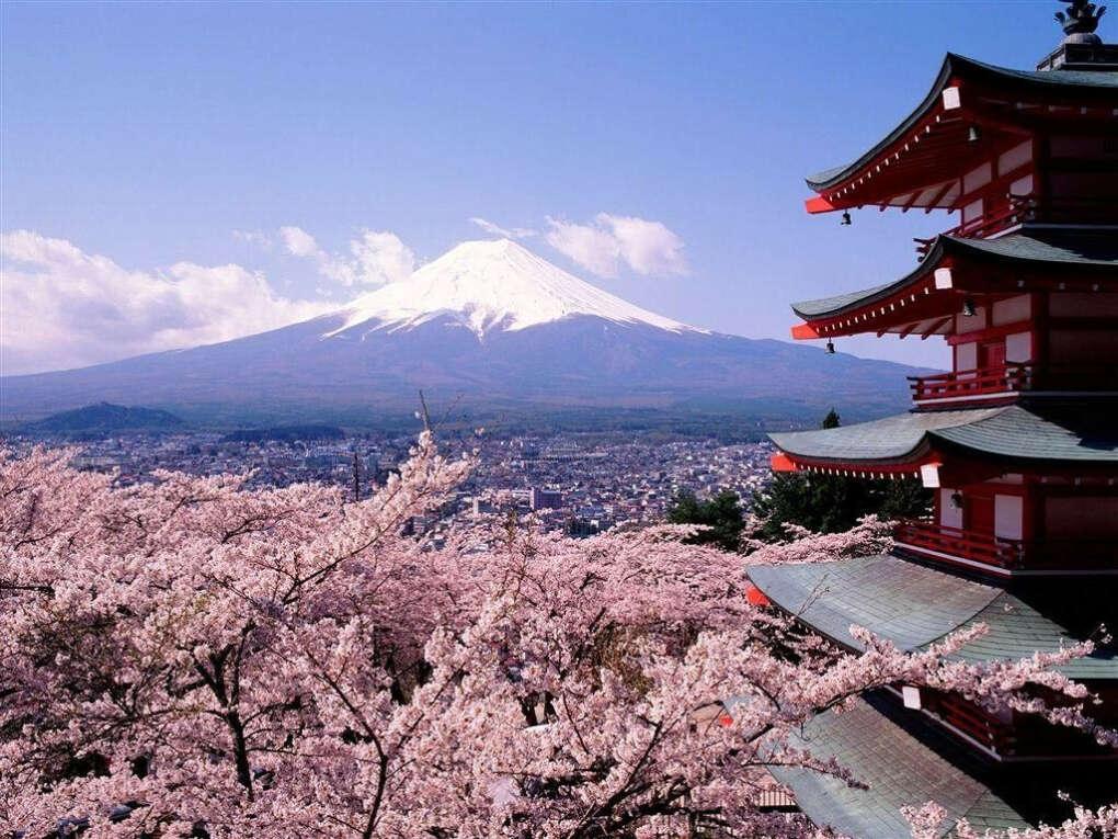 Посетить Японию во время цветения сакуры