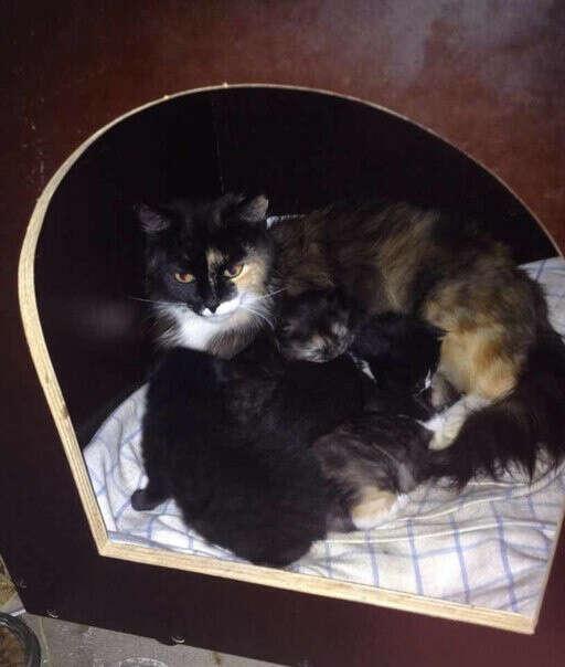 Хочу сделать стерилизацию дворовой кошечке, что бы каждый год в панике не пристраивать котят!!!