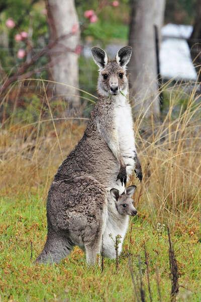 Покататься в сумке кенгуру