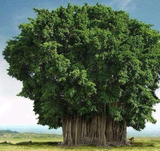 Увидеть самые необычные деревья
