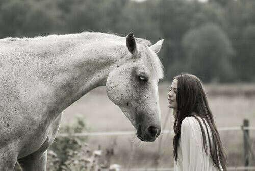 свою Лошадь