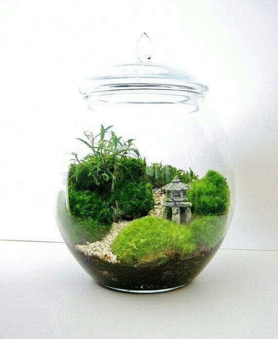 Замкнутая экосистема