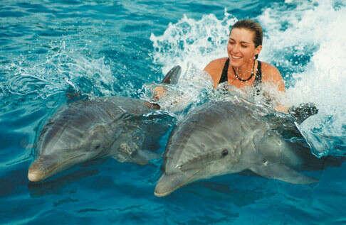 Поплавать с дельфинами!