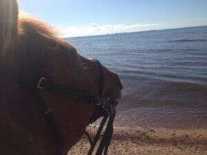 Конные прогулки в лесу и на заливе