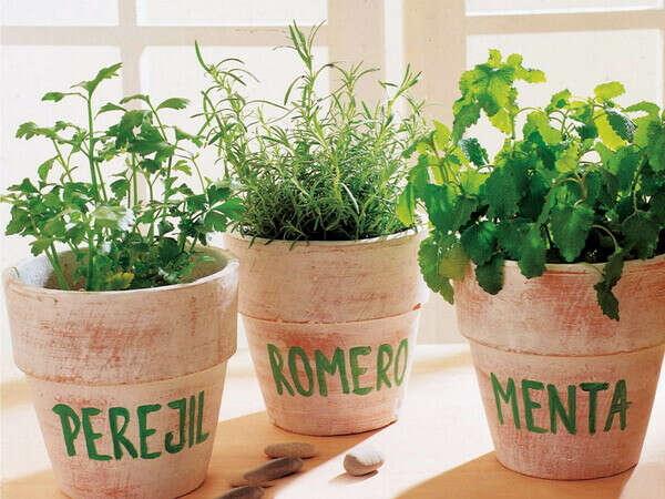 Выращивать пряные травы на подоконнике