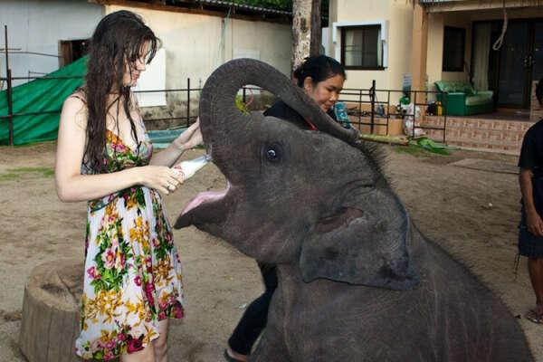 Покормить слоненка