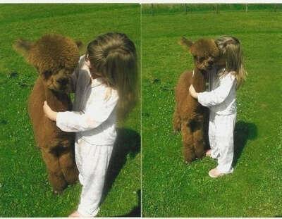 Обнять альпаку