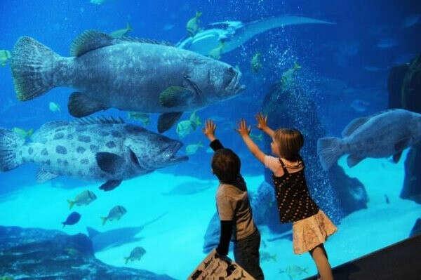 Переночевать в самом большом аквариуме мира