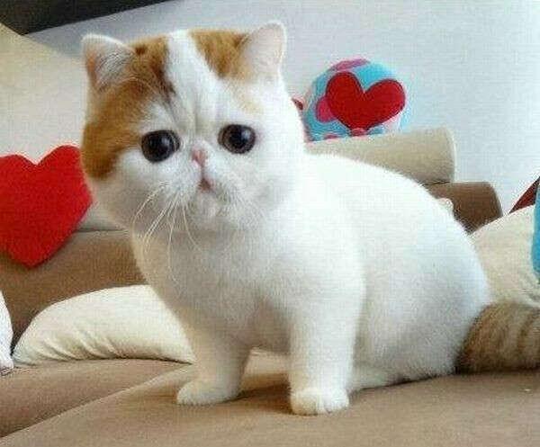 Хочу себе котенка:3