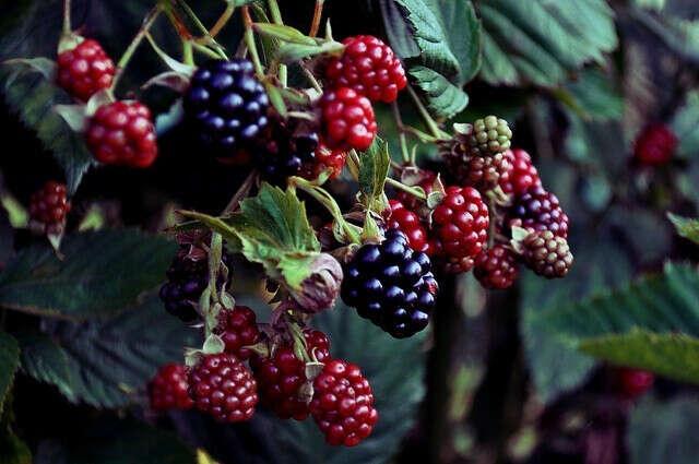Сходить в лес за ягодами