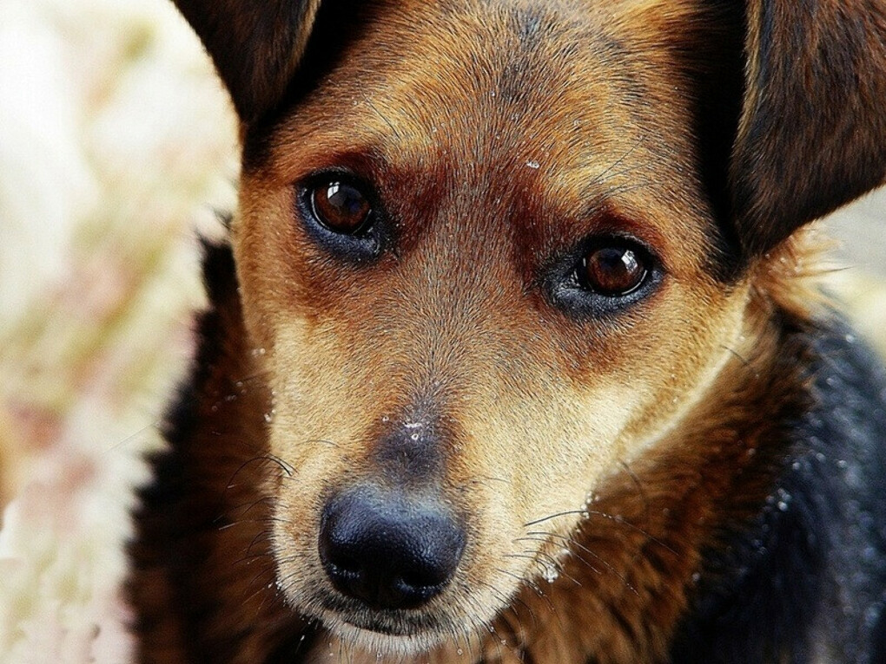 Помочь приюту с бездомными,больными животными.