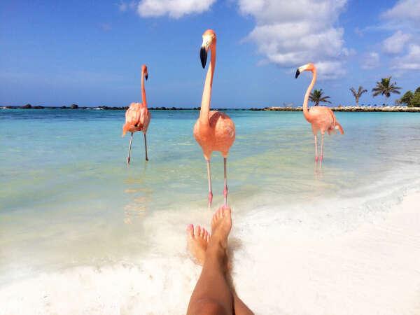 Побывать на о.Аруба в Карибском море и увидеть фламинго