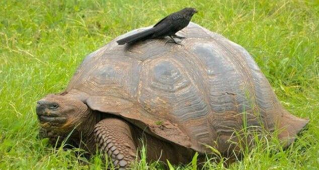 Покататься на большой черепахе