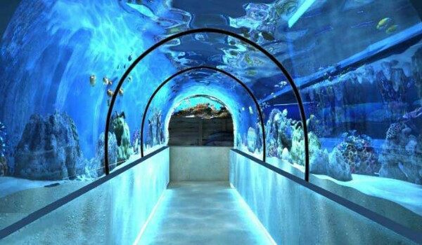 Хочу сходить в океанариум