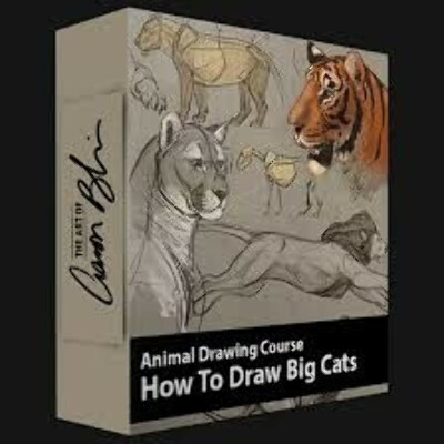 How to Draw Animals: The Big Cats