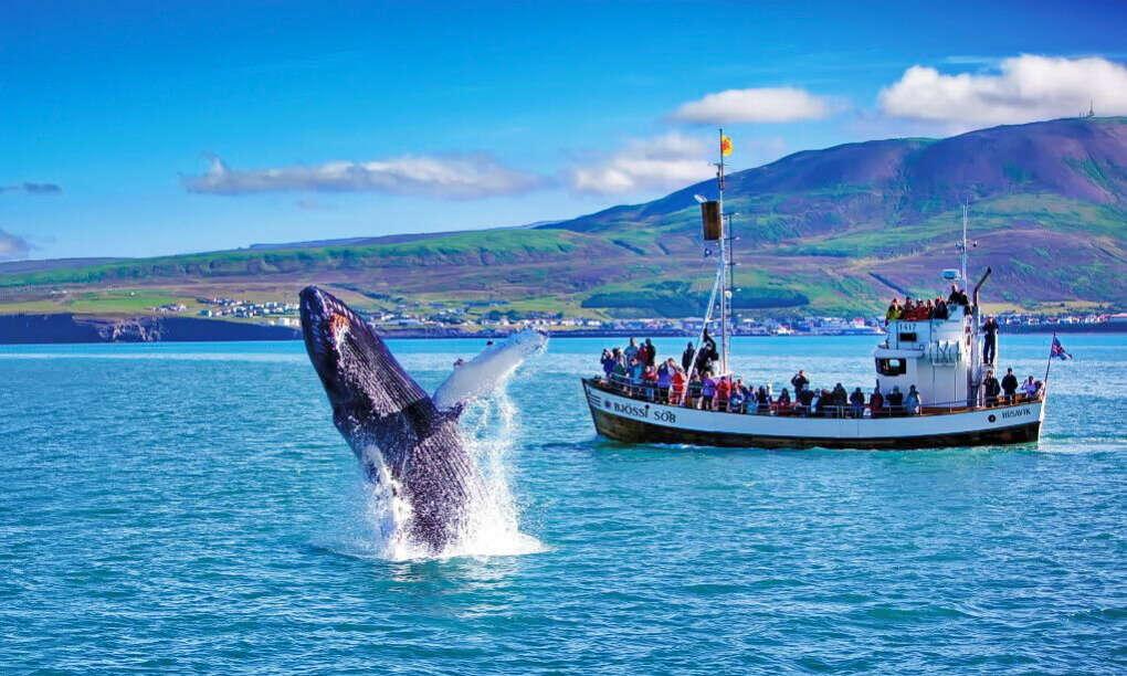Путешествие в Исландию- увидеть прыгающих китов))