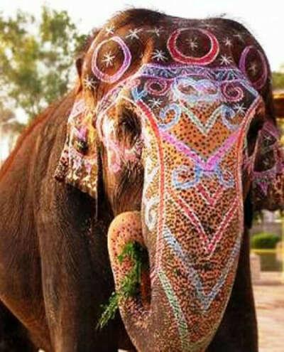 Покататься на слоне.