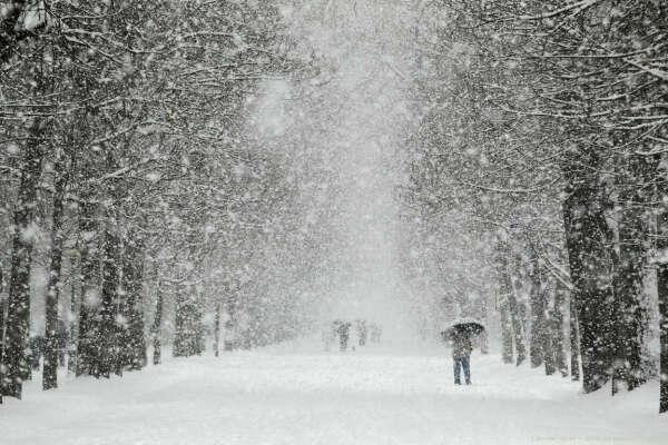 Погулять под снегопадом